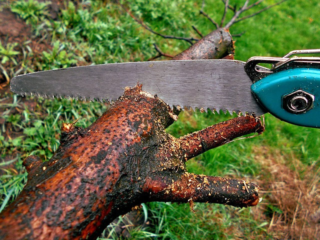 cutting a tree with a saw