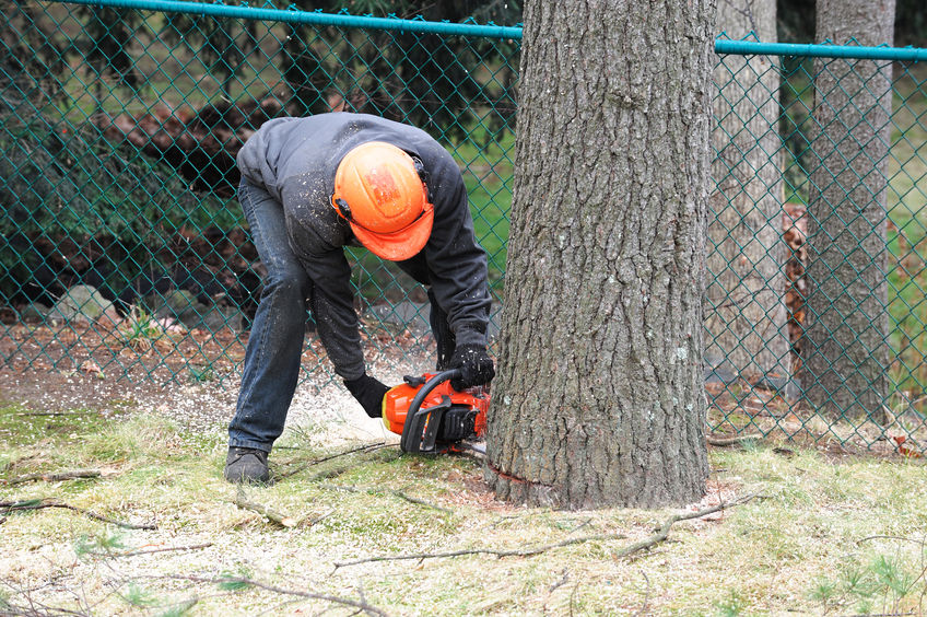 tree professional cutting a tree