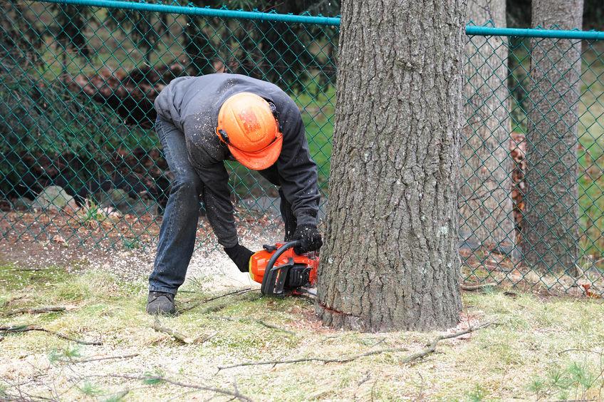 tree professional cutting a tree