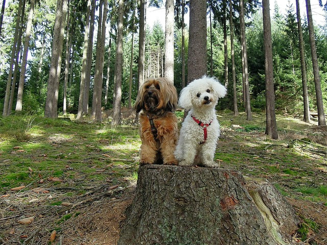 2 dogs sitting on a stump